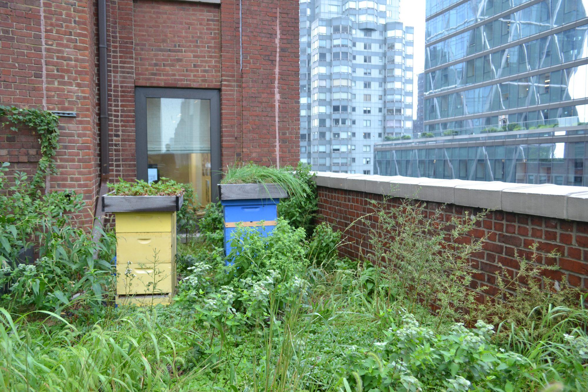 Urban beehive NYC